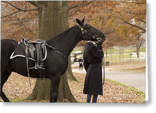 Vet Photographs Greeting Cards - Riderless Horse Greeting Card by Terry Rowe