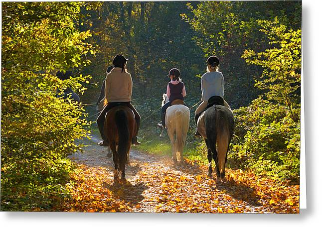 Riders With Horses In The Forest Greeting Card by Matthias Hauser