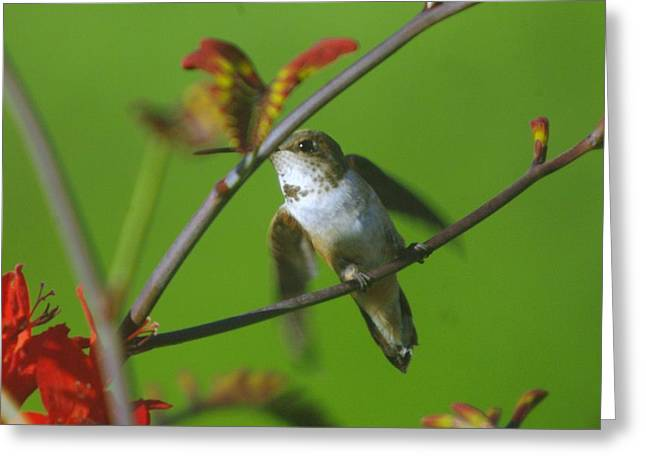 Migratory Bird Greeting Cards - Right at take off Greeting Card by Jeff  Swan