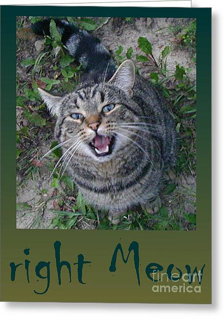 Marianne Nana Betts Photography Greeting Cards - right Meow Greeting Card by Marianne NANA Betts