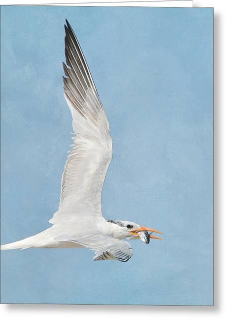 Tern Greeting Cards - Right Tern Greeting Card by Fraida Gutovich