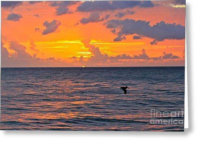 Rincon Greeting Cards - Rincon Sunset Greeting Card by The Art of Alice Terrill