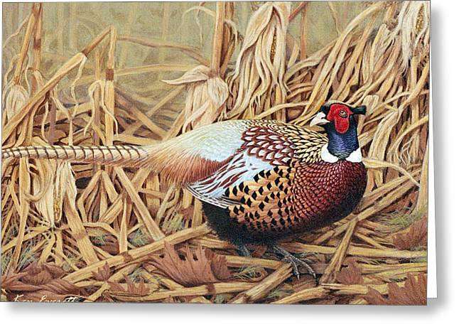 Acrylic Art Paintings Greeting Cards - Ring-necked Pheasant Greeting Card by Ken Everett