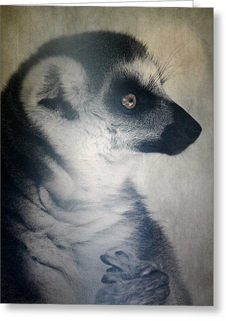 Melanie Lankford Photography Greeting Cards - Ring Tailed Lemur Greeting Card by Melanie Lankford Photography