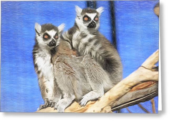 Lemur Greeting Cards - Ring-tailed Lemurs- Sedona and Verde Greeting Card by Donna Kennedy