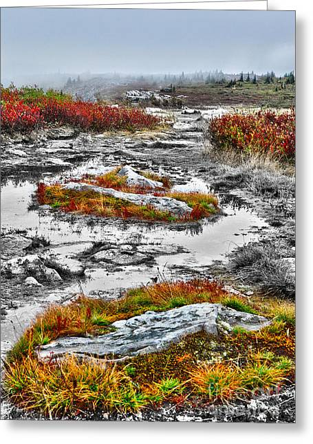 Rings Of Fire - Dolly Sods West Virginia Greeting Card by Dan Carmichael