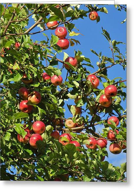 Wild Orchards Greeting Cards - Ripe Apples Greeting Card by Pixel Productions