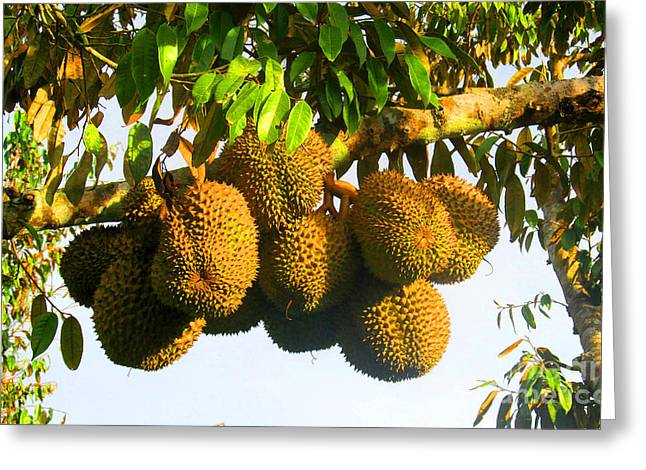 Ripe Durian Cluster Greeting Card by Tina M Wenger