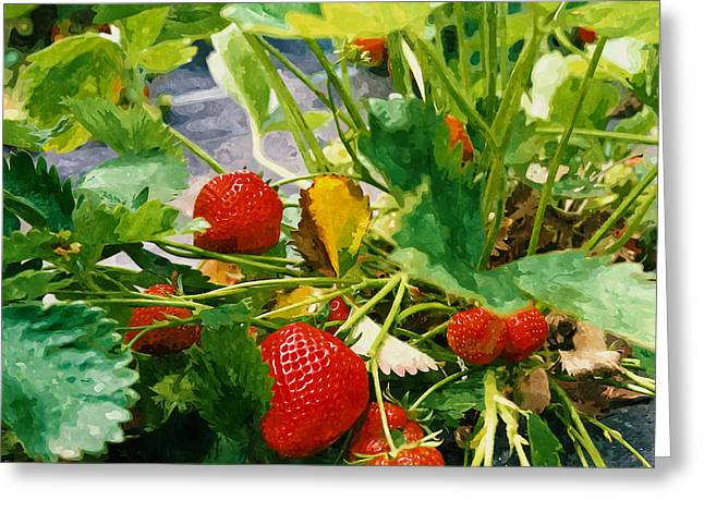 Cultivation Paintings Greeting Cards - Ripe strawberry on a plant ready to harvest Greeting Card by Lanjee Chee