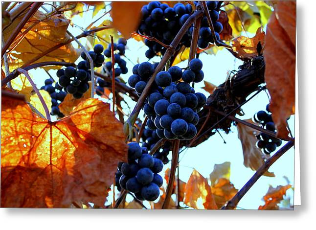 Concord Greeting Cards - Ripening Greeting Card by Glenn Curtis