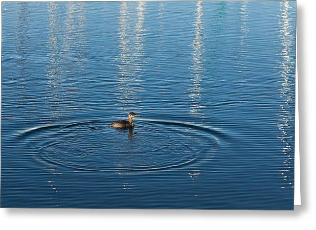 Water Fowl Greeting Cards - Ripples and Circles - Red-Necked Grebe Surfacing Greeting Card by Georgia Mizuleva
