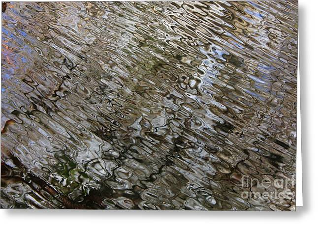 Ripples in the Swamp Greeting Card by Carol Groenen