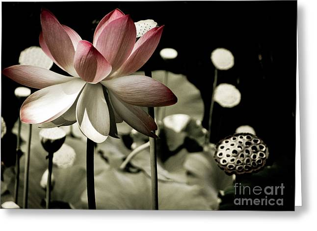 Sacred Artwork Greeting Cards - Rise Above Greeting Card by Colleen Kammerer