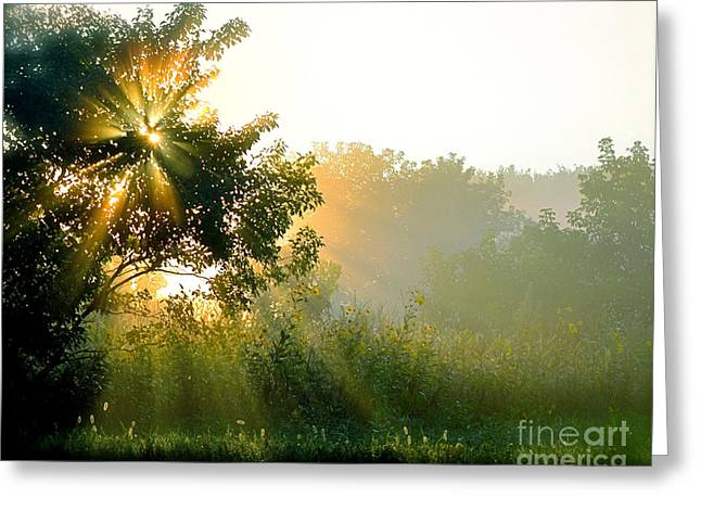Sun Breakthrough Greeting Cards - Rise and Shine Greeting Card by Sue Stefanowicz
