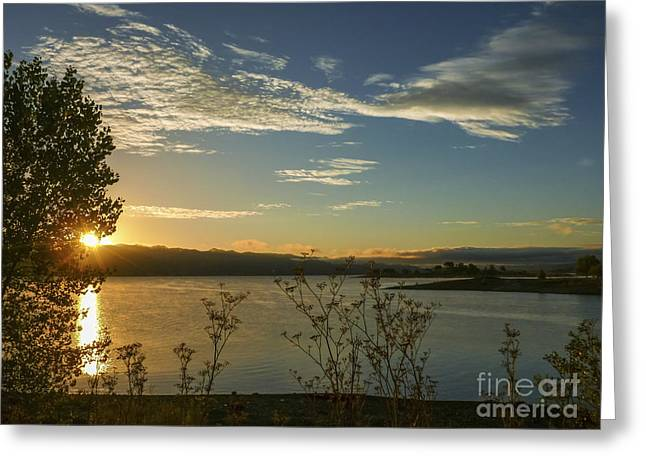 Lake Berryessa Greeting Cards - Risen Anew Greeting Card by Cheryl Wood