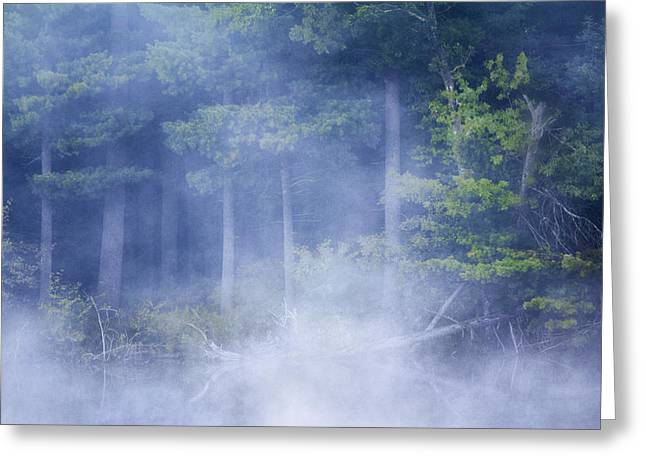 Rising Mist Greeting Card by Barbara Smith