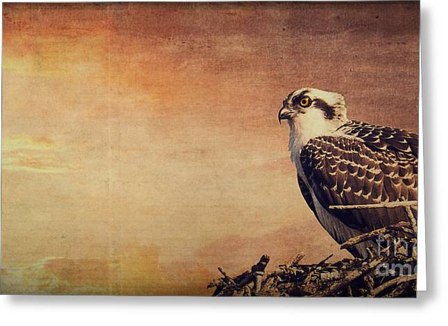 Osprey Photographs Greeting Cards - Rising Sun Greeting Card by Edward Fielding