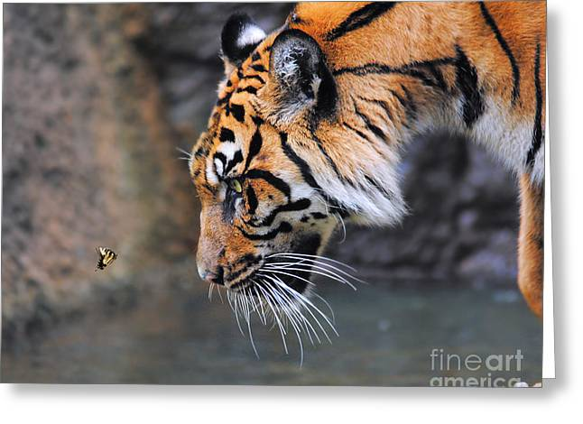 Wildcats Greeting Cards - Risk Taker Greeting Card by Jai Johnson
