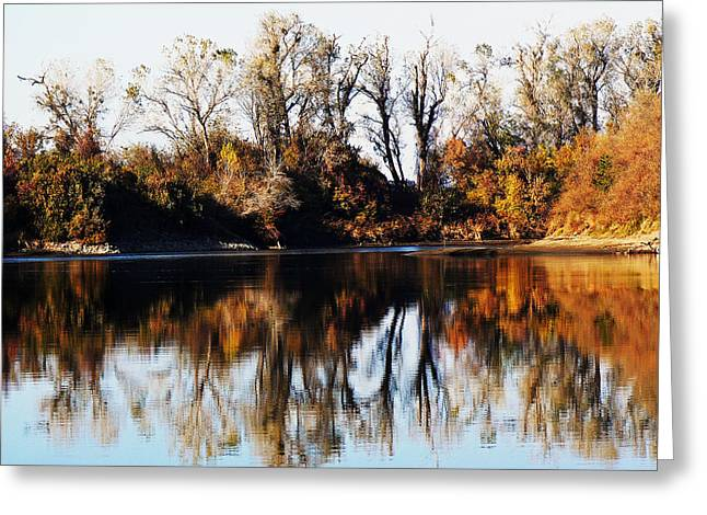 Colusa Greeting Cards - River Bank Sentinels Greeting Card by Pamela Patch
