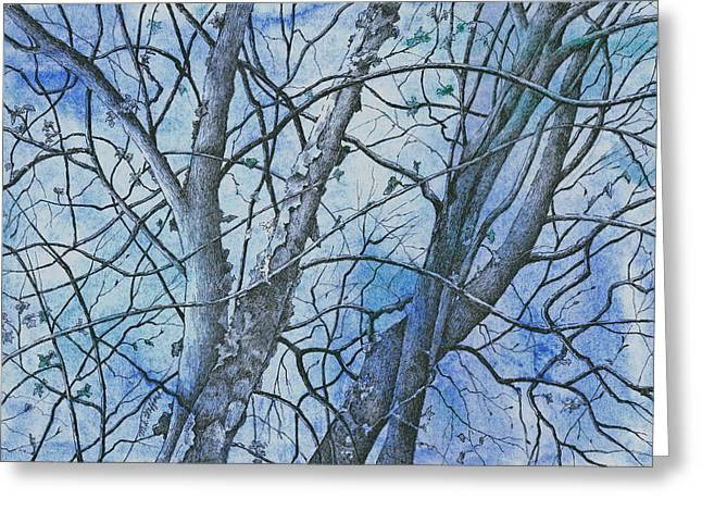Bare Trees Drawings Greeting Cards - River Birch Greeting Card by MaryAnn Stafford