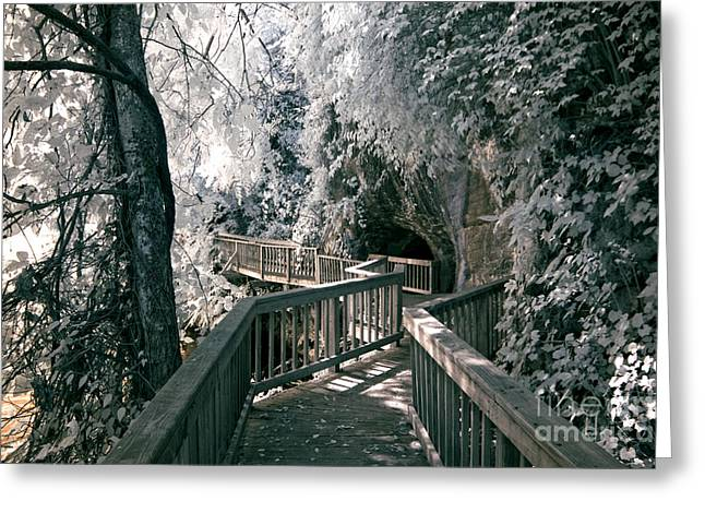 Nature Center Greeting Cards - River Boardwalk Greeting Card by Paul W Faust -  Impressions of Light