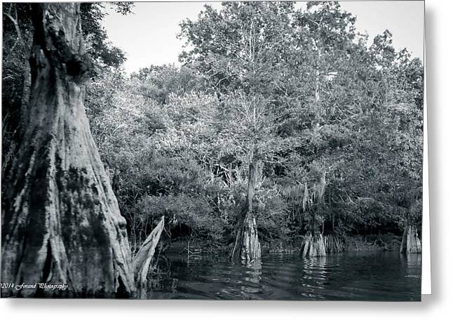 Reflections Of Trees In River Greeting Cards - River Cypress Greeting Card by Debra Forand