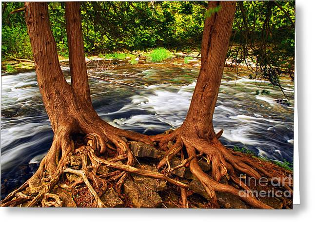Rushing Water Greeting Cards - River Greeting Card by Elena Elisseeva