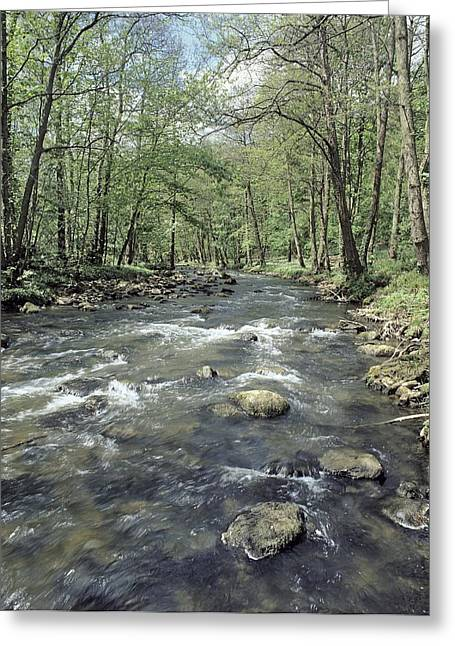 River Esk In Spring Greeting Card by Science Photo Library