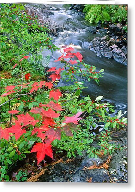 Upper Peninsula Greeting Cards - River Flowing Through A Forest, Black Greeting Card by Panoramic Images