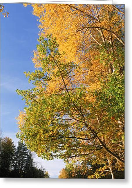 Autumn Colors Greeting Cards - River Flowing Through A Forest, Dal Greeting Card by Panoramic Images