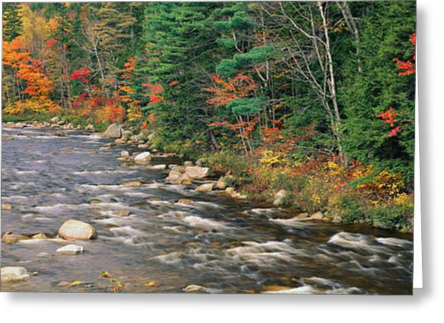 White River Scene Greeting Cards - River Flowing Through A Forest, Ellis Greeting Card by Panoramic Images