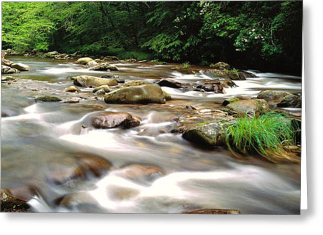 Tennessee River Greeting Cards - River Flowing Through A Forest, Little Greeting Card by Panoramic Images
