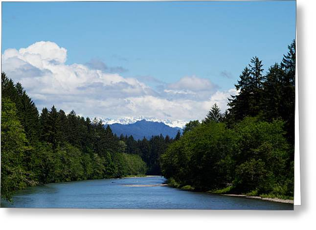 Olympic Peninsula Greeting Cards - River Flowing Through A Forest, Queets Greeting Card by Panoramic Images