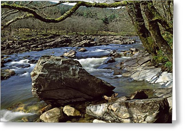 Water Flowing Greeting Cards - River Flowing Through A Forest, River Greeting Card by Panoramic Images
