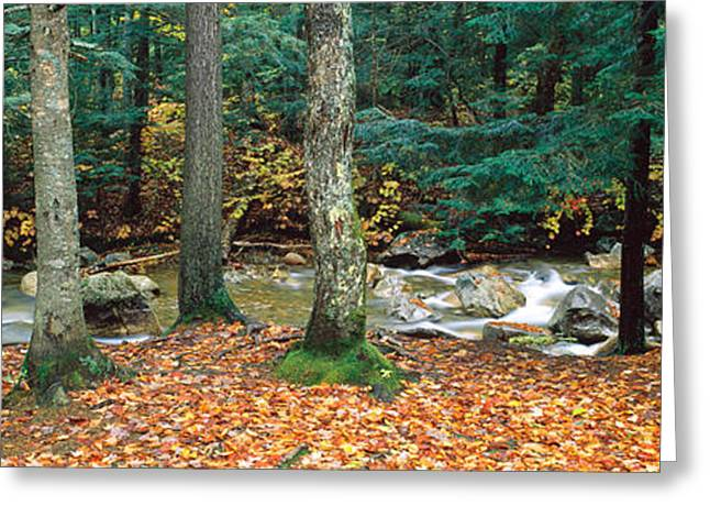 New Hampshire Leaves Greeting Cards - River Flowing Through A Forest, White Greeting Card by Panoramic Images