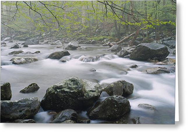 Tennessee River Greeting Cards - River Flowing Through The Forest Greeting Card by Panoramic Images