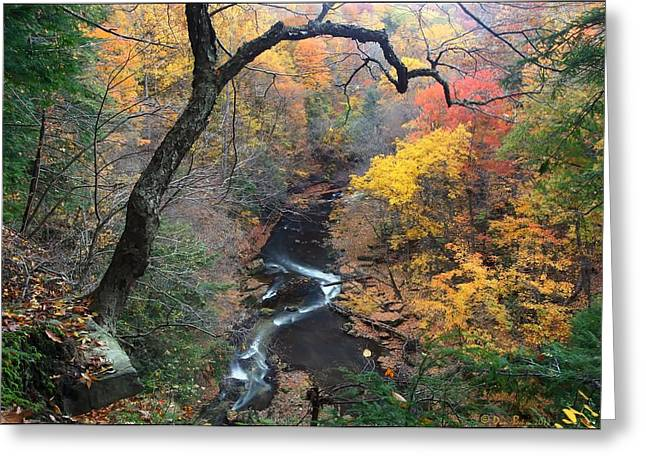 River Gorge Greeting Card by Daniel Behm