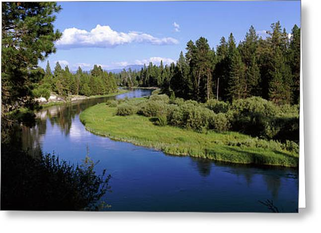 River In A Forest, Don Mcgregor Greeting Card by Panoramic Images