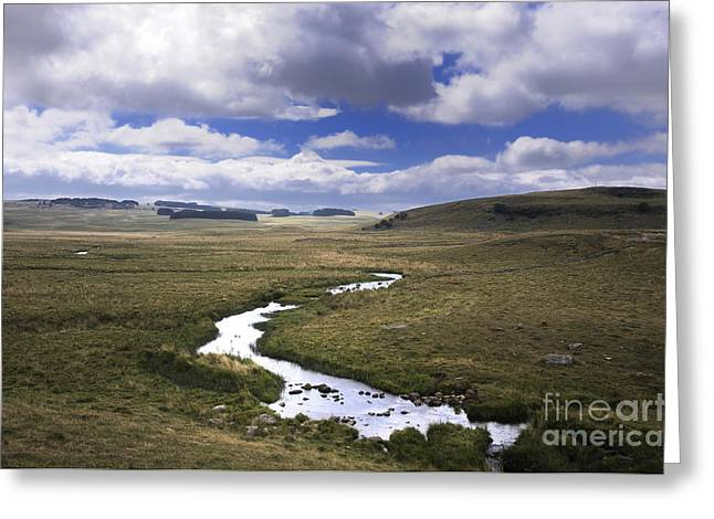 Tree Lines Greeting Cards - River in a landscape Greeting Card by Bernard Jaubert