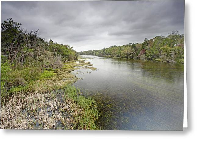 Ocala Greeting Cards - River In Ocala National Forest Florida Greeting Card by Scott  Leslie
