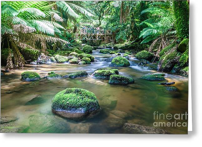 Australasia Greeting Cards - River in the forest of Tasmania - Australia Greeting Card by Matteo Colombo