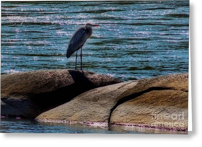 Photos Of Birds Greeting Cards - River Keeper Greeting Card by Skip Willits