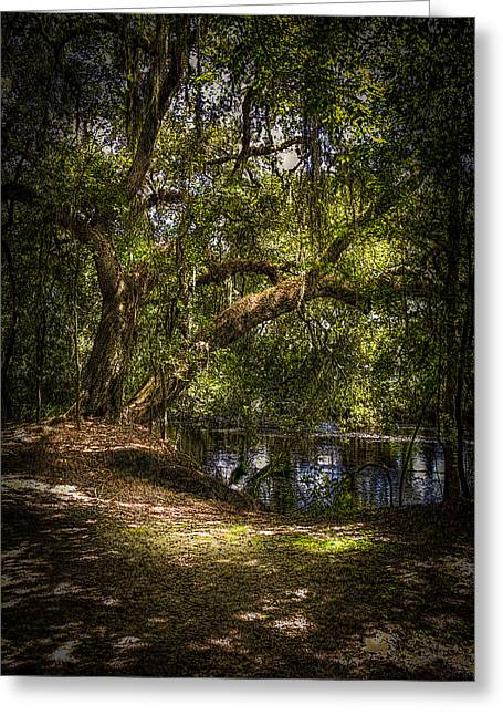 Dark Water Greeting Cards - River Oak Greeting Card by Marvin Spates