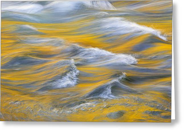Whitewater Greeting Cards - River of Gold Greeting Card by Mike Lang