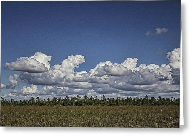 Mangrove Forest Greeting Cards - River Of Grass Greeting Card by Anne Rodkin