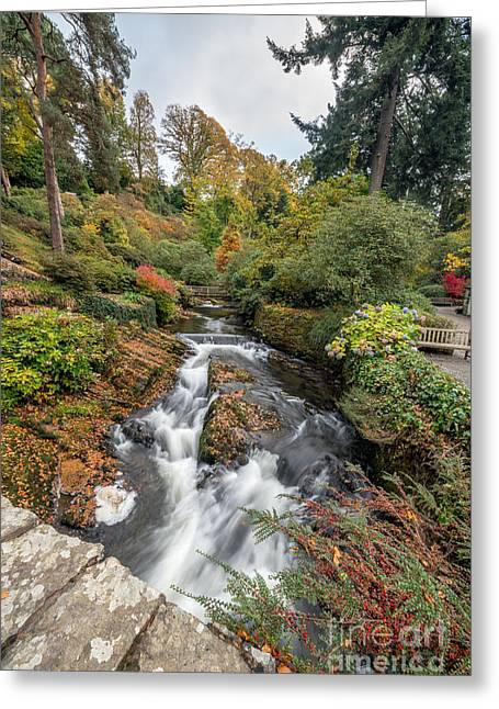 Stepping Stones Greeting Cards - River of Life Greeting Card by Adrian Evans