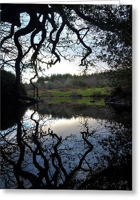 Branch Pyrography Greeting Cards - River of Mirrors Greeting Card by Fabien White