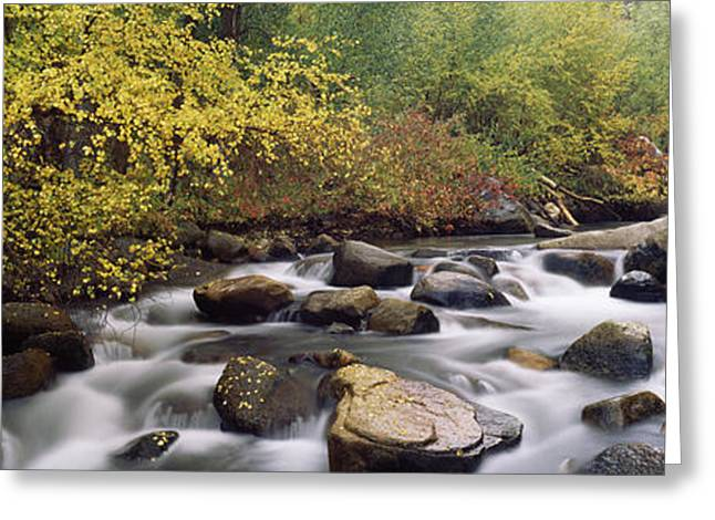 Fall Scenes Greeting Cards - River Passing Through A Forest, Inyo Greeting Card by Panoramic Images