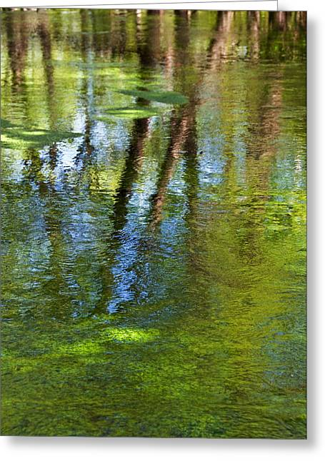 Long Island Greeting Cards - River Reflections Greeting Card by Alida Thorpe
