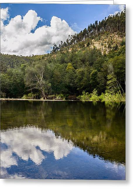 Trees Reflecting In Creek Greeting Cards - River Reflections I Greeting Card by Marco Oliveira